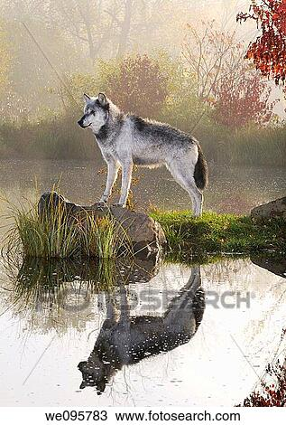 Stock Photo Of Backlit Gray Wolf Standing On Rock Over