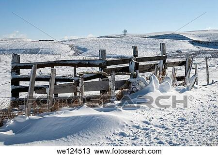 banque de photo cl ture bois dans neige a couvert champs cantal massif central france. Black Bedroom Furniture Sets. Home Design Ideas