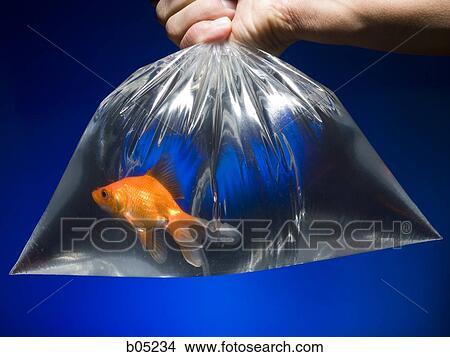 Banque de photo sac plastique poisson rouge b05234 for Poisson rouge plastique