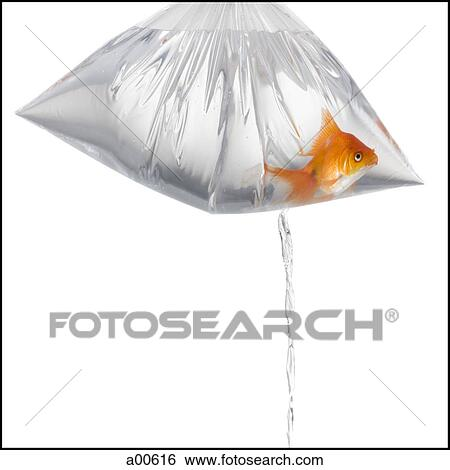 Goldfish Water | Stock Images Of Goldfish In Plastic Bag Leaking Water A00616