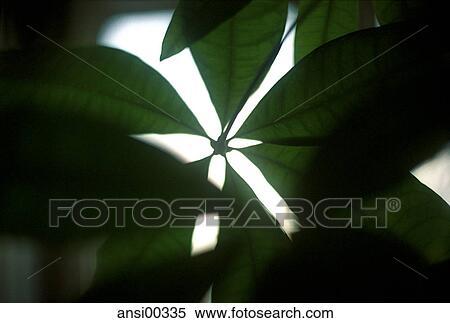 stock bild chlorophyll gr n nahaufnahme teilausschnitt fruehlingserwachen dunkel hell. Black Bedroom Furniture Sets. Home Design Ideas