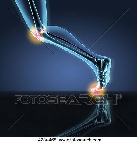 Images rayon x vue de a humain jambe projection for Douleur genou interieur