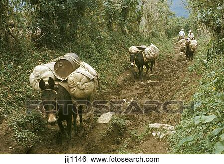 Stock Images of Mexico, Puebla, Sierra de Puebla, mule ...