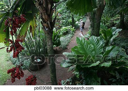 McBryde Garden, National Tropical Botanical Gardens, Kauai, Hawaii