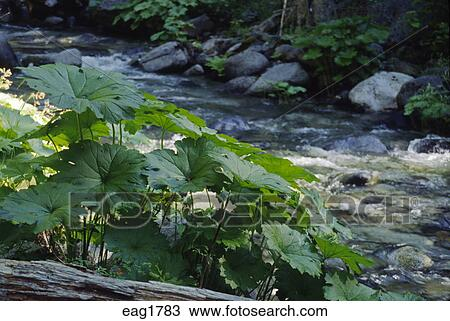 Stock Photo Of Indigenous Plants Grow By A Creek In The