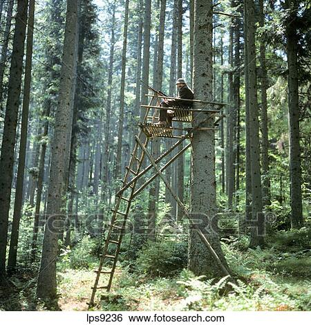 Stock Images Of Mr Hunter On A Raised Hide In The Forest