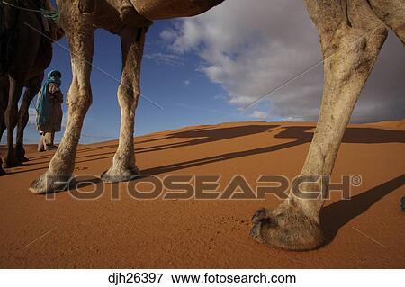 image afrique afrique nord maroc d sert sahara merzouga erg chebbi berb re membre. Black Bedroom Furniture Sets. Home Design Ideas