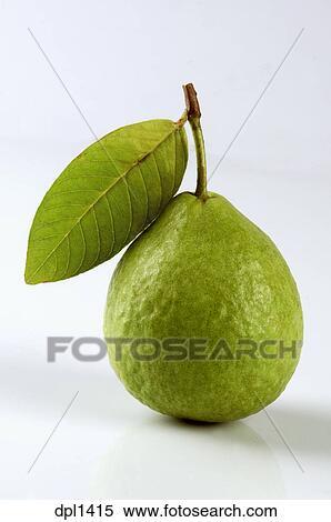 Banque d 39 image fruit une vert goyave feuille et fond blanc dpl1415 recherchez des - Feuille de goyave acheter ...