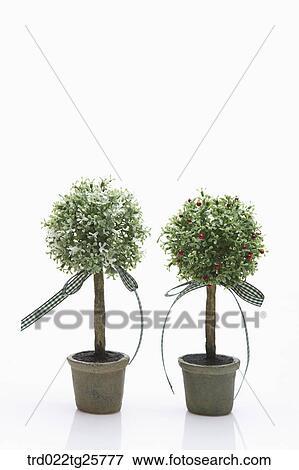 banque d 39 illustrations ruban arbre dans pot fleurs trd022tg25777 recherche de cliparts au. Black Bedroom Furniture Sets. Home Design Ideas