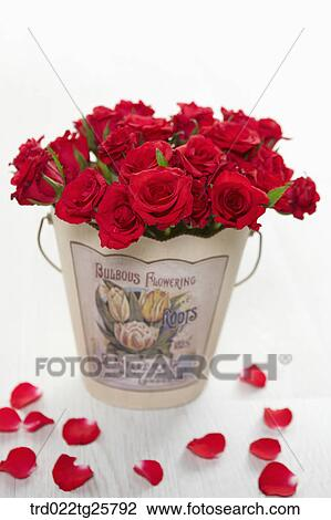 Clip Art Of Red Roses In The Bucket Search Clipart