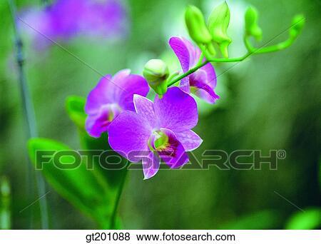 Images ext rieur ext rieur fleur jour journ e for Orchidee exterieur