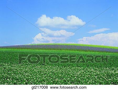 Field Crops Clipart Scene Plain Field Crops