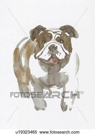 牛头犬, 水颜色, 绘画