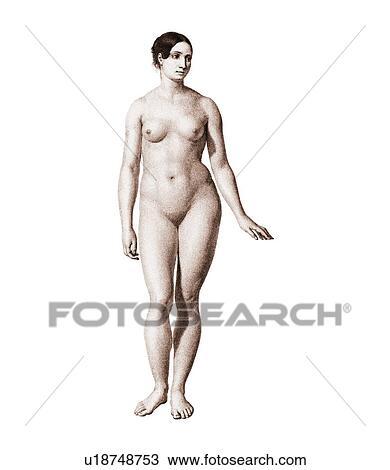 Stock Foto - weiblicher akt, kunstwerk u18748753 - Suche