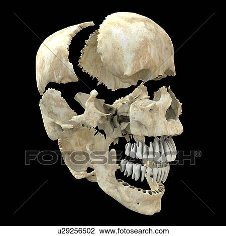 Stock Photo Of Skull Computer Artwork Of A View Of A Disarticulated