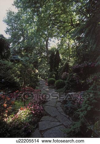 Colecci n de foto gardens sombra jard n dos alto for Arboles altos para jardin