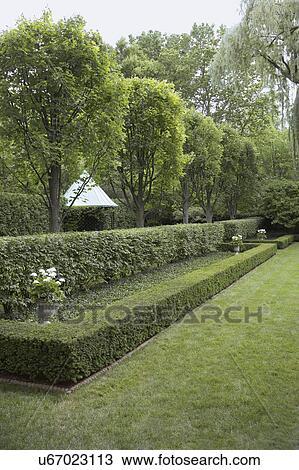 stock foto gardens semi f rmlichkeit geformt rechteckig hecken einige niedrig und. Black Bedroom Furniture Sets. Home Design Ideas