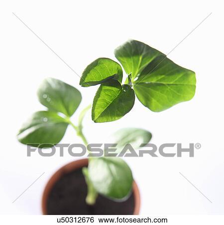 banque d 39 images vue haut de jeune f ve plante dans pot u50312676 recherchez des photos. Black Bedroom Furniture Sets. Home Design Ideas