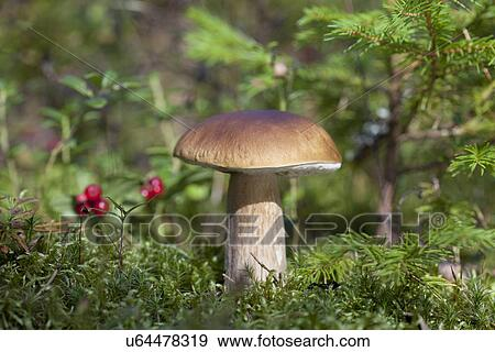 Come guarire un fungo delle ascelle