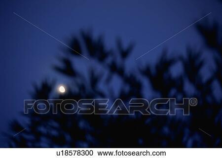 免版税(rf)类图片 - 月亮