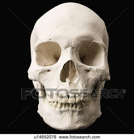 Pictures Of Human Skull With Teeth On Black U14652078 Search