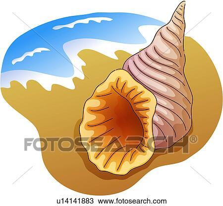 Clipart mollusco turbante conchiglia mare spiaggia for Mare clipart