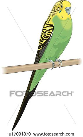 clipart of parakeet u17091870 search clip art illustration murals rh fotosearch com Cute Parakeet Background Cartoon Parakeet