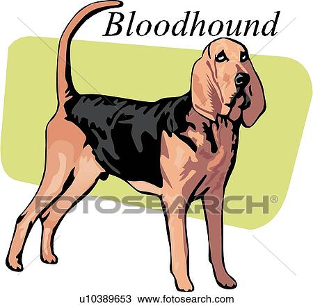 Clipart of Bloodhound u10389653 - Search Clip Art, Illustration ...