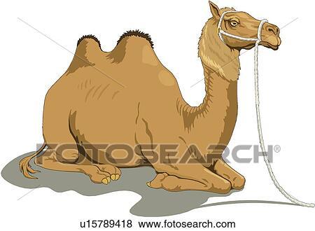 Clipart chameau u15789418 recherchez des cliparts des - Dessin de chameau ...