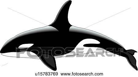 clip art of killer whale u15783769 search clipart illustration rh fotosearch com killer whale clip art free Whimsical Whale Clip Art