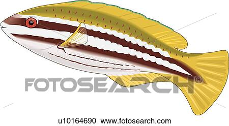 clipart of parrotfish u10164690 search clip art illustration rh fotosearch com Sturgeon Point Productions Logo Suwannee River Sturgeon