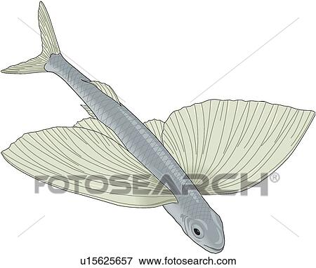 Clip art of flying fish u15625657 search clipart for Flying fish drawing