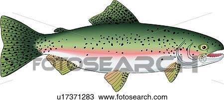 Clipart of Trout u17371283 - Search Clip Art, Illustration Murals ...