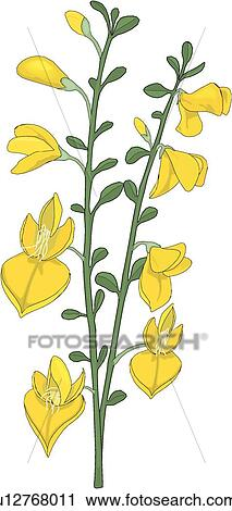 broom tree coloring pages - photo#43