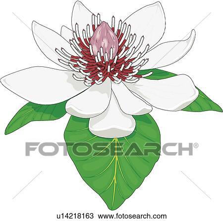 木蘭の画像 p1_7