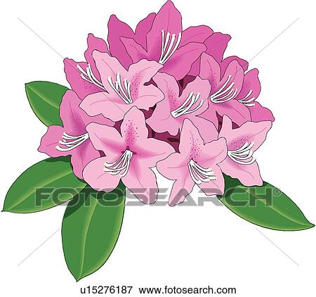 Pink Rhododendron Drawing Clip Art Rhododendron