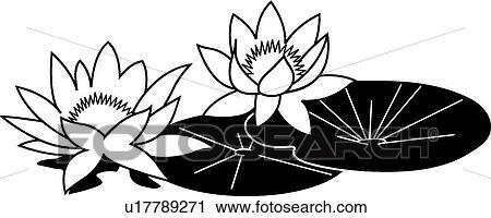 剪贴画 - 水百合花