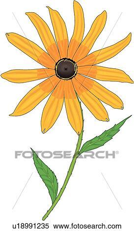 clipart of black eyed susan u18991235 search clip art