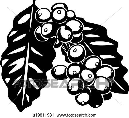 Coffee Bean Drawing Clipart Coffee Beans