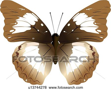 节肢动物, 昆虫