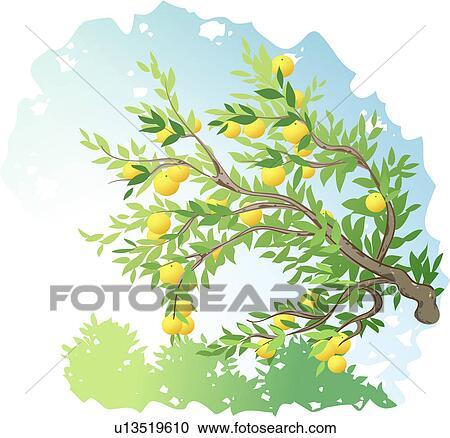Clipart piante albero arancia frutta arancio albero for Albero fico prezzo