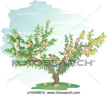 Clipart of peach, tree, plants, peach tree, fruit, icon ...