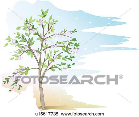Beans Plant Drawing Plants Indian Bean Tree
