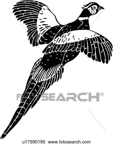- , animal, bird, species, pheasant, . Fotosearch - Search Clip Art ...