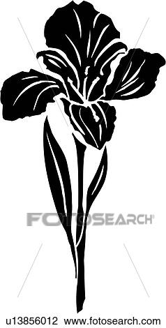 clipart of flower iris u13856012 search clip art illustration rh fotosearch com iris clip art free iris clip art eye