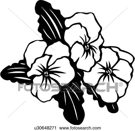 clipart of flower pansies pansy varieties u30648271 search rh fotosearch com Flower Clip Art Flower Clip Art