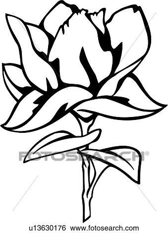 Clip Art of , flower, magnolia, varieties, u13630176 - Search ...
