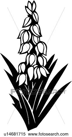 clipart d sert fleur sud ouest yucca varieties u14681715 recherchez des clip arts des. Black Bedroom Furniture Sets. Home Design Ideas