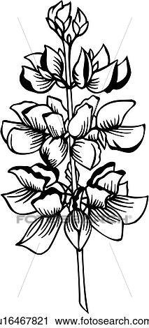 clipart of flower lupine varieties u16467821 search