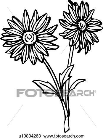Clipart of , chrysanthemum, flower, mum, varieties, u19834263 ...